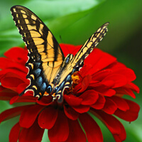 Option for Avatar: Butterfly